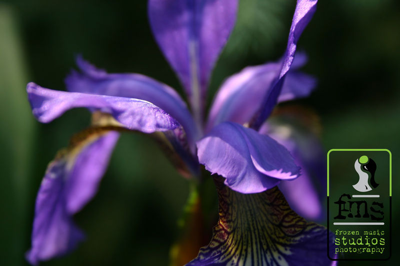 Flowerblog